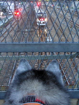 久し振りの電車観察