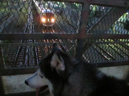 夕暮れの電車観察