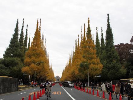 神宮外苑銀杏並木2016