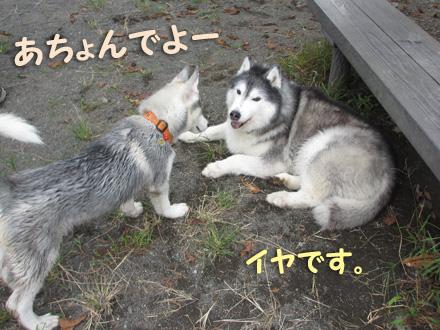 ボルドーくんのランデビュー