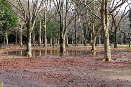代々木ドッグラン池