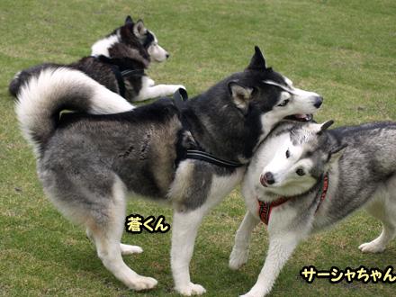 蒼くん&サーシャちゃん
