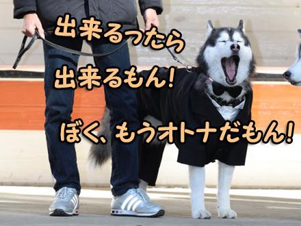 10thハスまみれ紹介タイム