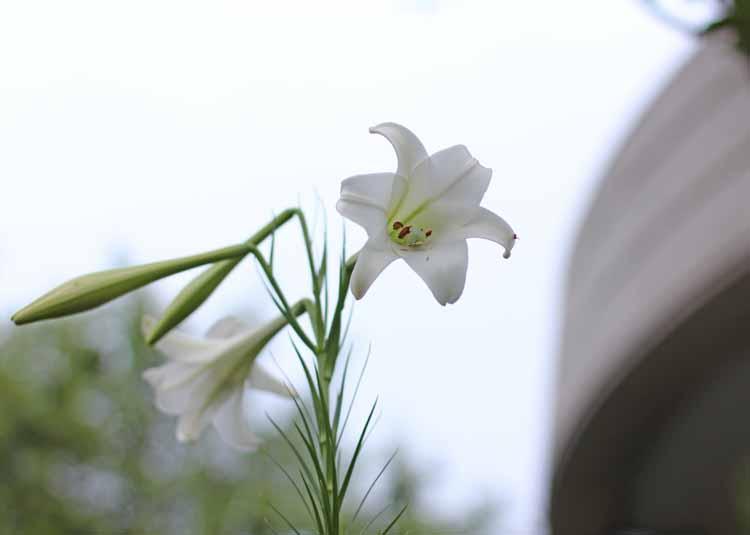 16takasago_yuriMB_02.jpg