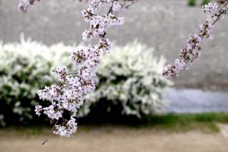 160402kamogawa003.jpg