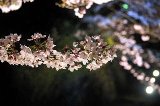 160404okazaki002.jpg