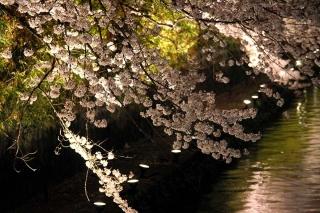 160404okazaki015.jpg