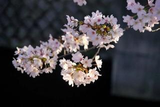 160406tetsugakunomichi002.jpg