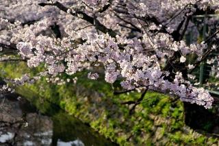 160406tetsugakunomichi003.jpg
