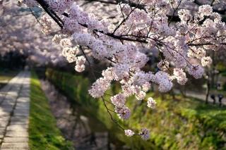 160406tetsugakunomichi004.jpg