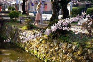 160406tetsugakunomichi009.jpg