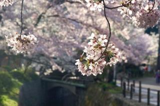 160406tetsugakunomichi011.jpg