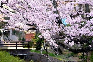 160406tetsugakunomichi013.jpg