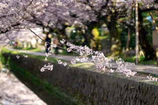 160406tetsugakunomichi014.jpg