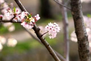 160406tetsugakunomichi015.jpg
