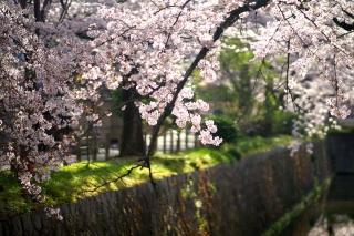 160406tetsugakunomichi018.jpg