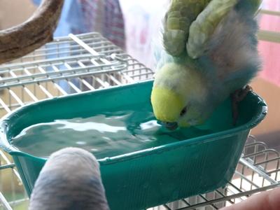 水浴びGO