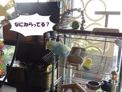 ジンくんのブログ