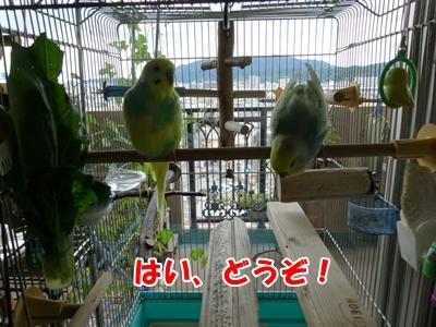 楽しかった放鳥が・・・