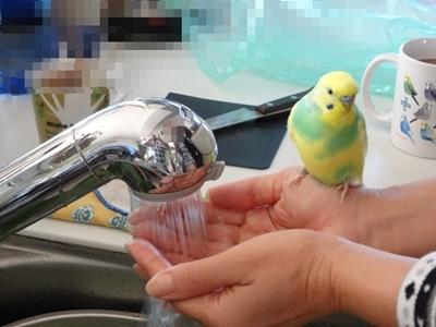 水浴びの主役