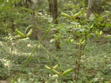 きれぎれの風彩 森林公園161016(2)-14