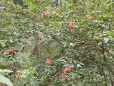 きれぎれの風彩 森林公園161016(2)-15
