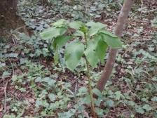 きれぎれの風彩 森林公園161016(2)-17