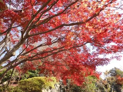 きれぎれの風彩 近場の紅葉161204-04