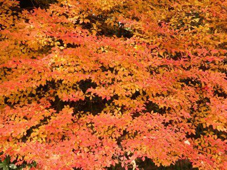 きれぎれの風彩 近場の紅葉161204-08
