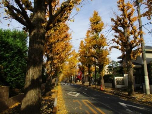 田園調布銀杏(いちょう)並木