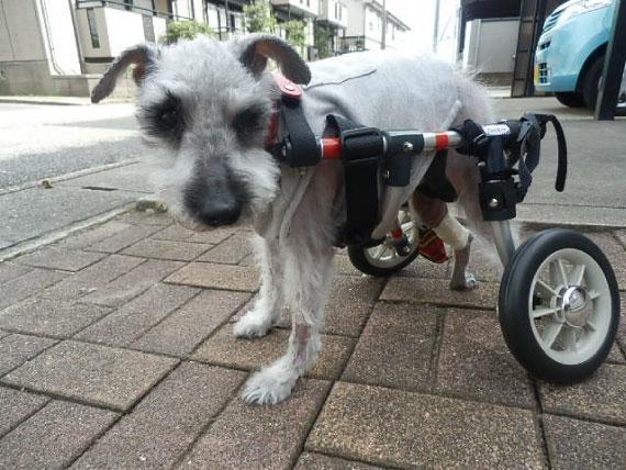 車椅子_1