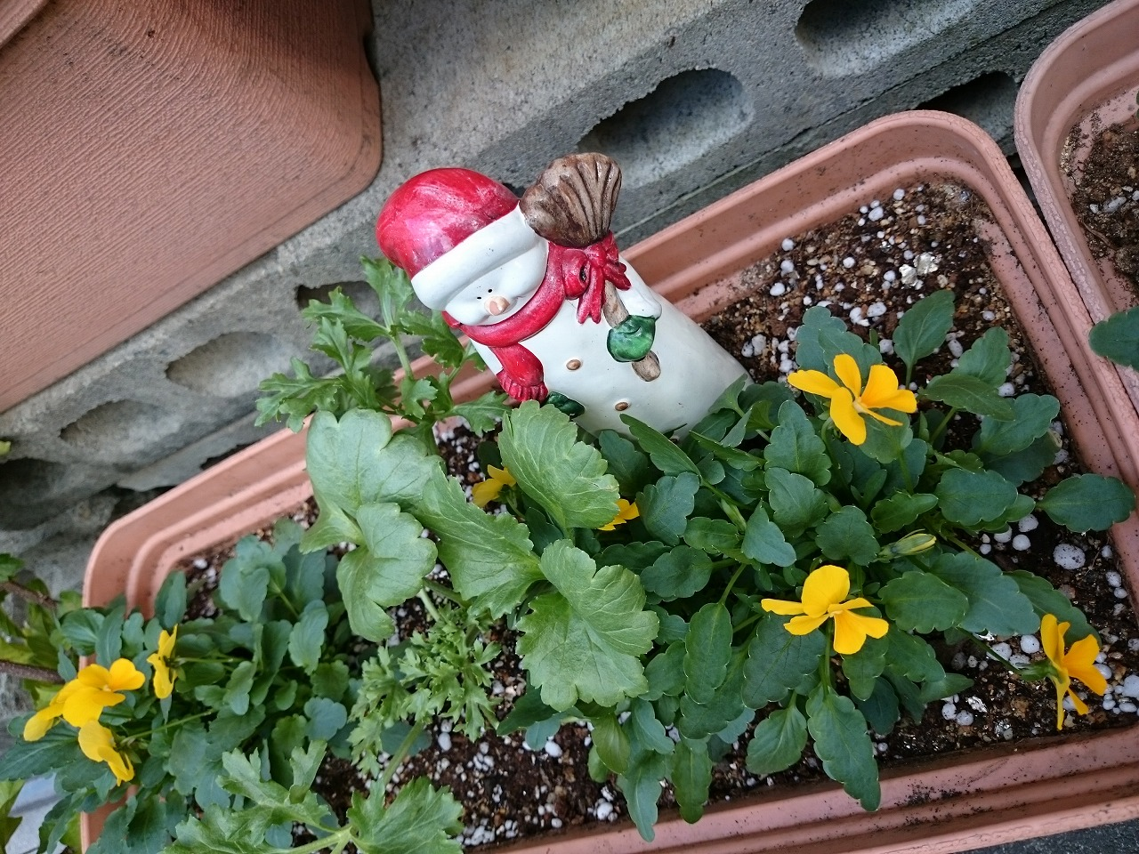クリスマス 花