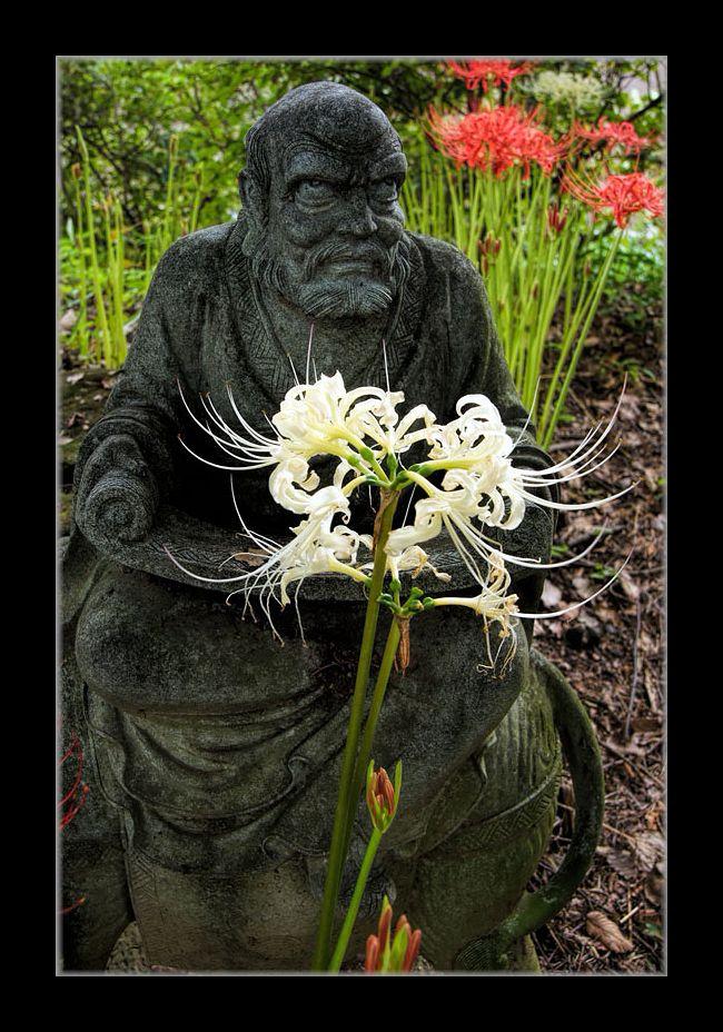 寺の彼岸花