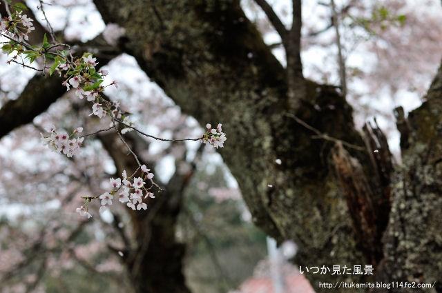 DS7_0158ri-s.jpg