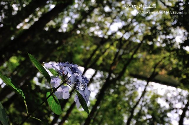 DS7_3446ri-s.jpg