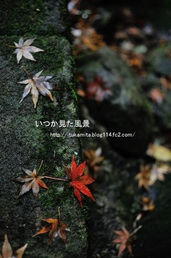 DS7_6903r2i-ss.jpg