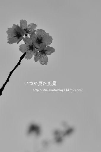 DS7_8456wi-ss.jpg
