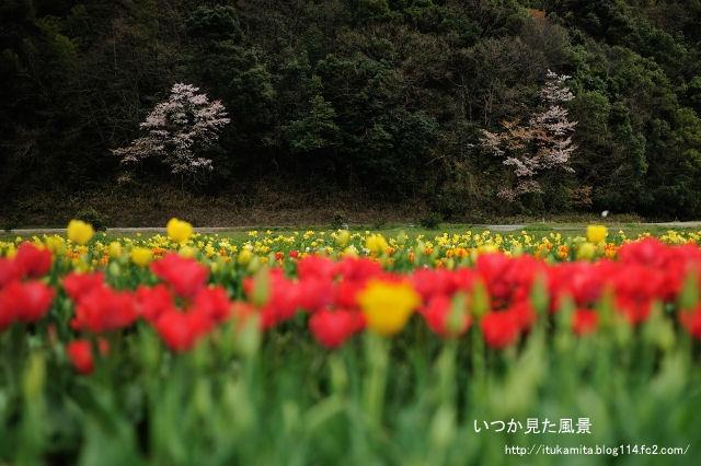 DS7_9060ri-s.jpg