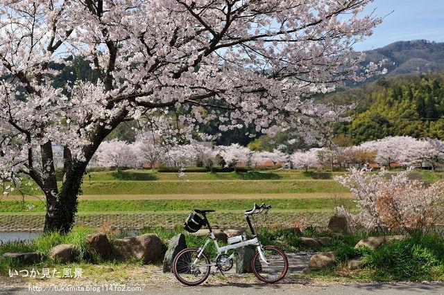 桜旅 パート2