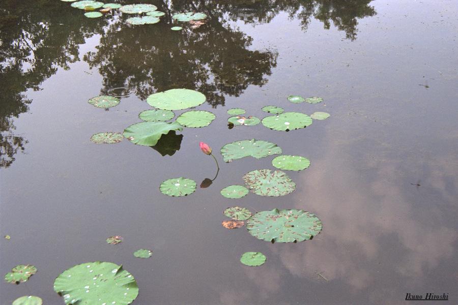 トゥドゥック帝陵池面