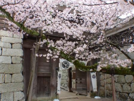 松山城 太鼓門とソメイヨシノ