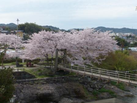 衝上断層公園 桜 2