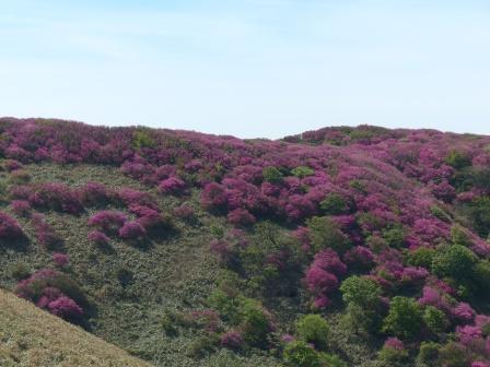 ツルギミツバツツジ の風景 1