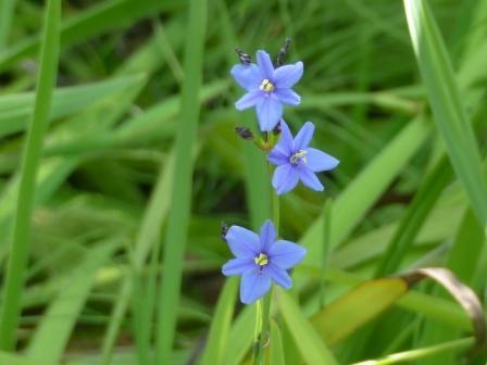 青い花 ?