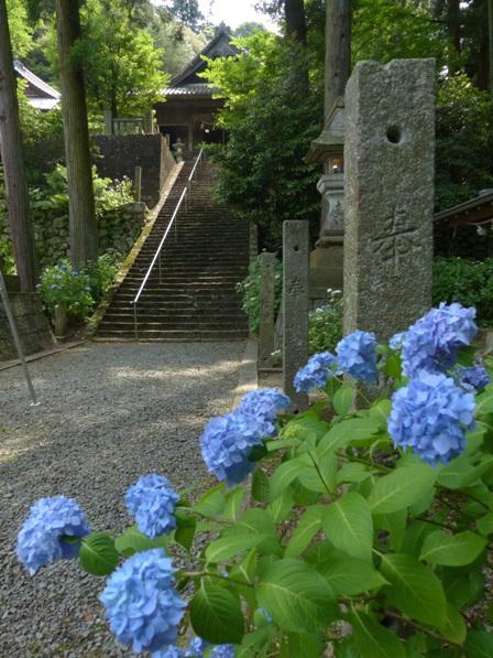 紫陽花 と 惣河内神社