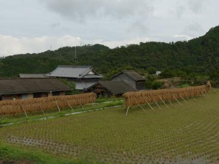 稲木風景 1