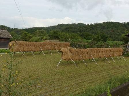 稲木風景 2