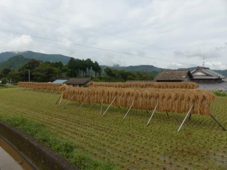 稲木風景 3