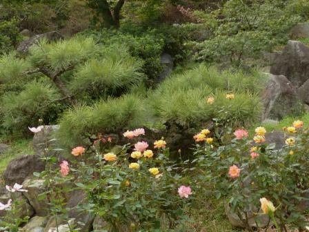 松 と バラ