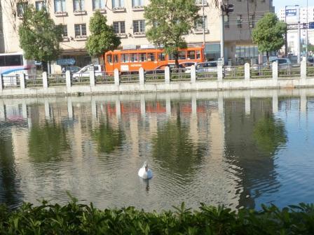 お堀と路面電車 (伊予鉄道) と白鳥 2